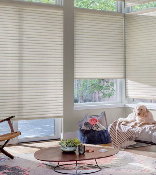 bohemian living room with a woven accent chair and dog with hunter douglas sonnette shades on large windows Reno 89521