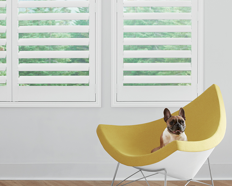 while newstyle shutters in reno nevada