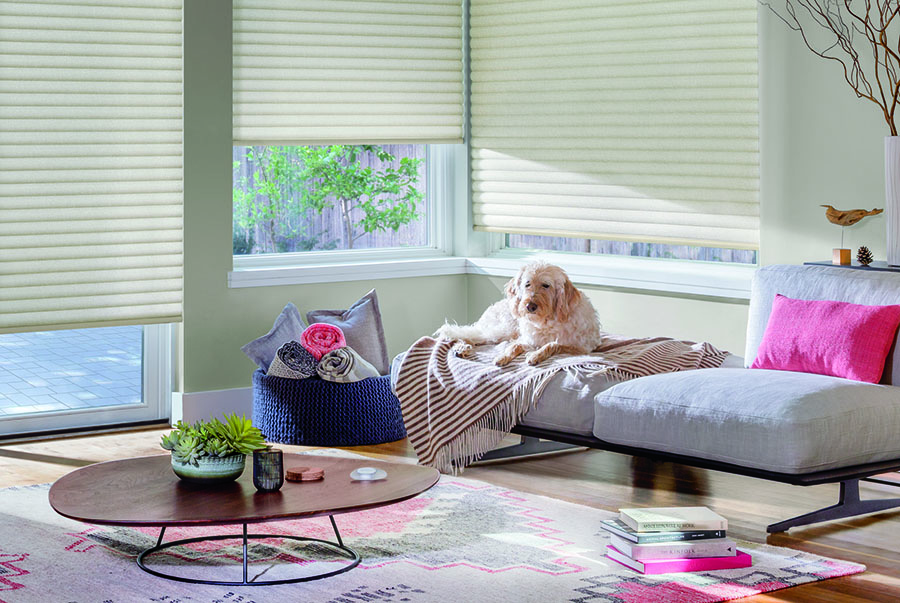 pet laying in sunny spot with cellular roller shades in Reno NV
